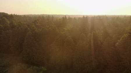 cisza : Aerial shot of landscape sunrise bright sun over misty meadow with trees clear morning. Natural rural scene of a field with a beaming warm sunlight. The concept of a summer dawn