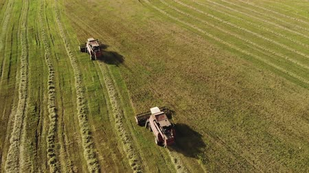 shred : Aerial view of two red-colored combine harvesters with white cab roofs reaping grain crops on a farm in dry Sunny weather. Behind tractors the crushed straw is thrown out. The concept of agribusiness