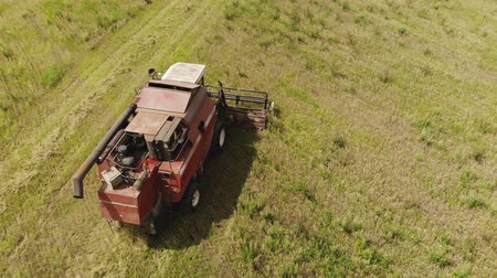 tahıllar : Aerial view of the combine harvester harvesting oat field. Summer harvest from the perspective of a drone. Top view of the roof and grain bin Stok Video