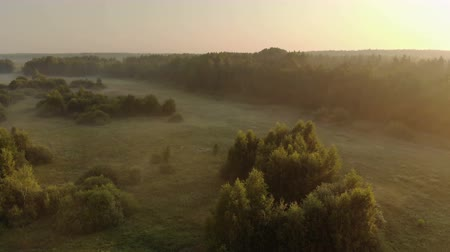 ködös : Aerial shot of landscape sunrise bright sun over misty meadow with trees clear morning. Natural rural scene of a field with a beaming warm sunlight. The concept of a summer dawn