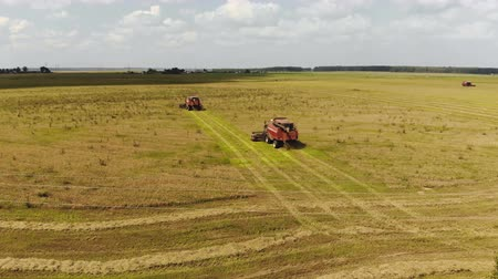 metrópole : Aerial view of four harvesters cutting ripe oats from farmland on the background of power lines, behind the machines falls crushed straw. Drone flies around agricultural machines in an arc