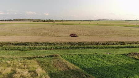 収穫 : Aerial side view of vintage harvester red standing on farmland farm with wheat and waiting to unload a full hopper with grain. Drone flies up to the agricultural machine in the field 動画素材