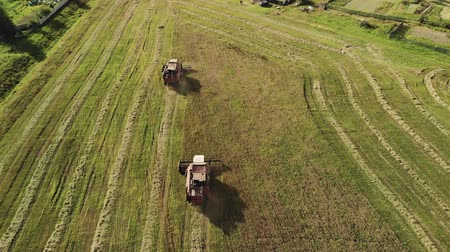 収穫 : Aerial view of two red-colored combine harvesters with white cab roofs reaping grain crops on a farm in dry Sunny weather. Behind tractors the crushed straw is thrown out. The concept of agribusiness