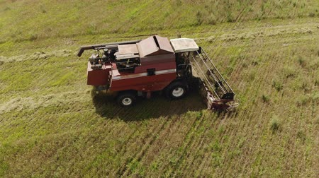 tahıllar : Drone shot of a farmer in a harvester with a working Reaper on farmland. Cutting crops in hot dry summer weather. The concept of the lean season Stok Video
