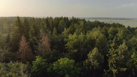 köknar ağacı : Aerial view lateral movement over the forest with coniferous and deciduous trees with green and brown dry firs. Beautiful nature at dawn