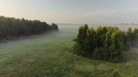 cienie : Stunning misty morning in the countryside. Aerial view of the green edge of the forest with bushes and farmland before sunrise in summer. Beautiful nature of Europe Wideo