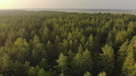 köknar ağacı : Aerial: flying over an endless coniferous forest on a picturesque summer evening. A mesmerizing shot from above the vast spruce thickets at dawn. Breathtaking views of countless tree canopies