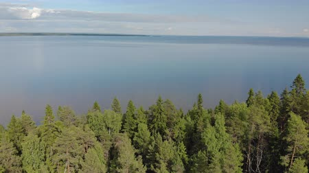 finland : Aerial flight over the dense coniferous forest to the limitless blue pond. Stunning summer landscape of Northern nature with fir trees and sea. Lake Onega in Karelia