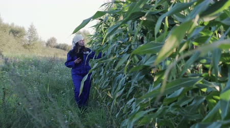 aparelho : Woman agronomist in overalls with an electronic tablet in her hands passes a corn plantation. An agricultural worker examines the crops and enters data into the device. The concept of agribusiness Stock Footage