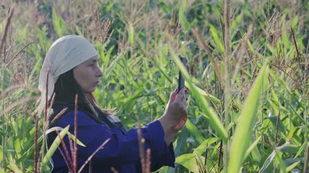 попкорн : A woman agronomist in overalls with a tablet computer on an agricultural cultivated corn field. The concept of modern technologies in agribusiness. Warm evening weather in the summer Стоковые видеозаписи