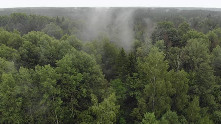 sprookje : Flying over a picturesque misty forest. Drone point of view over the tops of wet evergreen trees in cloudy weather Stockvideo
