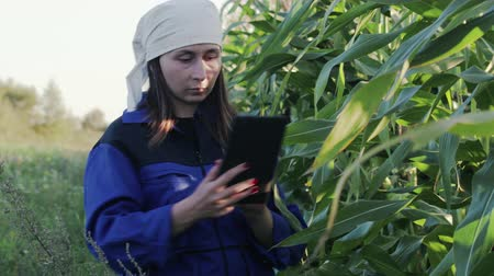 notas : A beautiful, young woman agronomist in a special, work suit holds a touchpad tablet and walks in a corn field, examining crops before harvesting. The concept of agribusiness. An agricultural engineer is studying the yield