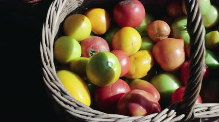 диеты : Dolly shot top view close-up of freshly picked yellow, green, red tomatoes in a wooden brown basket. Raw vegetables. The concept of the fall harvest Стоковые видеозаписи
