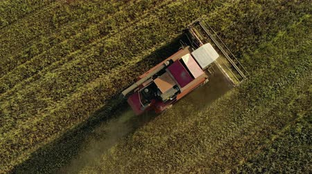 tahıllar : The red harvester works in the field, leaving behind dust and straw. He turns the reel, cutting off the ears. Aerial drone shot