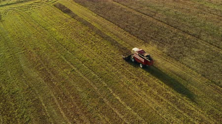 tahıllar : Birds eye view of a vintage combine harvester cutting wheat in a field for the food industry and agribusiness agriculture