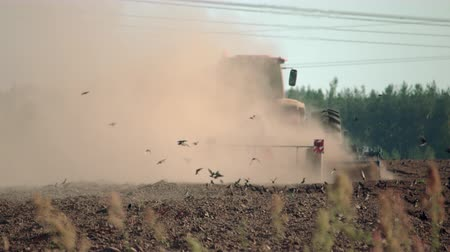 tahıllar : The tractor plows the field, raising dust, and behind it fly black birds and collect food. Agricultural machinery works in the field of spring sowing Stok Video