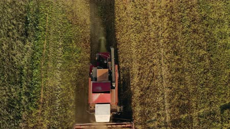 solo : Vintage combine harvester working on a yellow farm field, cinematic aerial view from top to bottom from a drone. The concept of agribusiness