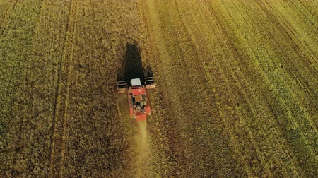tahıllar : Aerial top view of a harvester reaping oats in a farm field. Behind the agricultural machine falls cake and straw. Long shadow of the tractor falls in front. Drone flies around in a circle