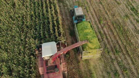 groene groenten : Aerial view cutting corn silage with a self-propelled machine and filling a tractor trailer with crushed material in Sunny evening weather in autumn. Beautiful rural scene, the concept of agribusiness