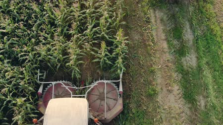 hozam : Top view of the unloading auger of a self-propelled machine throwing green corn cake into a tractor trailer in Sunny evening weather. Silage preparation for feed Stock mozgókép