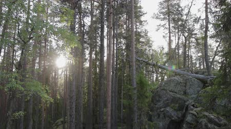 древесный : The rock, covered with moss, overhangs a small gorge on the background of an old, pine forest. Stone gorge inspires fear with its mystical appearance. Wild nature. The stage is set for a mystical films