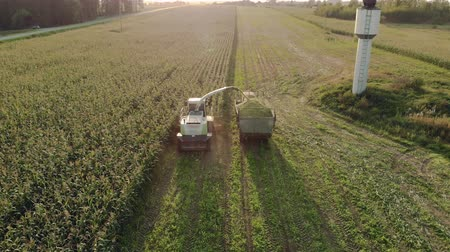 tahıllar : The forage harvester cuts the corn using the reaping mechanism and chopper and sends the silage crop through the auger to the tractor, the harvest time for the cattle. Agricultural machines working in the field, aerial view