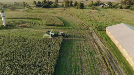 milharal : Aerial: harvesting ripe corn with a self-propelled mower in a tractor trailer on a Sunny evening. Drone flight on the background of agricultural buildings. The concept of agribusiness