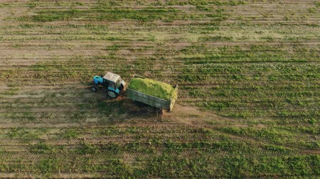 ciężarówka : Aerial: tractor with a crop of silage in a trailer rides through a freshly mown field of corn in the countryside on a Sunny evening. The drone follows the agricultural machine. Concept of agribusiness