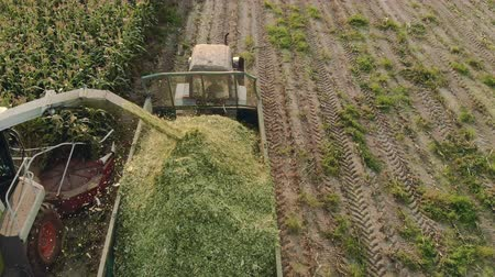 groene groenten : Top view of the unloading auger of a self-propelled machine throwing green corn cake into a tractor trailer in Sunny evening weather. Silage preparation for feed Stockvideo