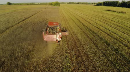 tahıllar : Red, old, soviet harvester working in the field. The Reaper thresher turns, cuts off the ears of grain crops, the back of the machine is thrown straw. Aerial view