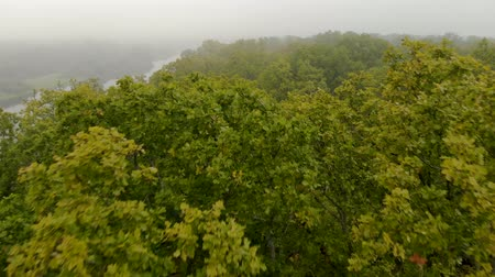 účinky : Aerial flight over the branches of a green oak tree in the jungle on the background of a foggy river in autumn. Mysterious forest. Movement of the drone at low altitude above the leaves