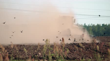 tahıllar : Agribusiness: a farmer on an energy-intensive tractor plows arid, dusty soil in hot, dry weather. The agricultural machine is followed by a lot of wild birds in search of food, earth insects, worms