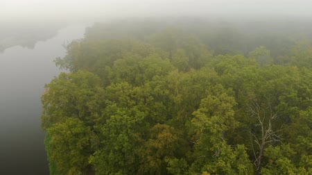 temor : Aerial flight over the branches of a green oak tree in the jungle on the background of a foggy river in autumn. Mysterious forest. Movement of the drone at low altitude above the leaves