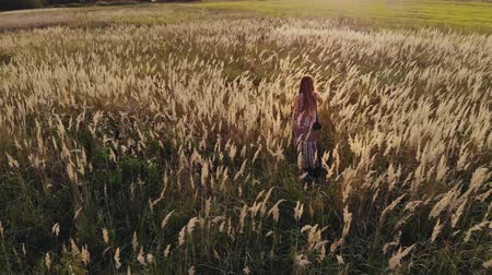 epaule : Aerial: rear view of a pretty young hippie woman with a camera on her shoulder walking through an agricultural field at sunset and touching the dry tall grass. Girl in a sundress in nature