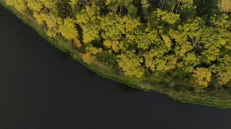 margem do rio : Aerial: top view of the bend of the dark river with a picturesque autumn green forest on the Bank. The drone flies up over the pond