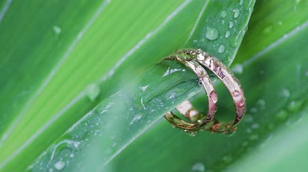 composição : Close-up of a beautiful wedding composition with gold rings and green leaves with raindrops, background of wedding rings. Symbol of love and marriage Stock Footage