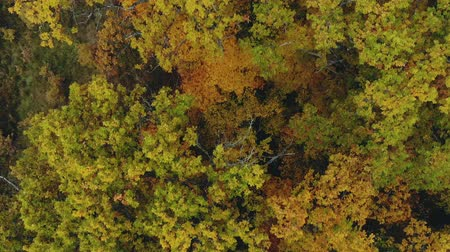 zelené oči : Tree with colorful foliage. The view from the height of bird flight on an autumn colored forest, fabulous landscape