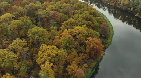 разнообразие : Beautiful orange-red autumn forest, many trees near the river. Aerial view of a fabulous autumn landscape. Screen saver, footage for filmography Стоковые видеозаписи