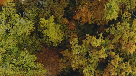 paisaje selva : Tree with colorful foliage. The view from the height of bird flight on an autumn colored forest, fabulous landscape