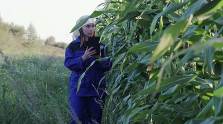 industria alimentare : A beautiful, young woman agronomist in a special, work suit holds a touchpad tablet and walks in a corn field, examining crops before harvesting. The concept of agribusiness. An agricultural engineer is studying the yield