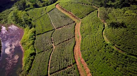 cejlon : Aerial view of hills with tea plantation and river misty morning Sri Lanka drone footage