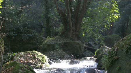rivulet : The water flows quickly into the sun.