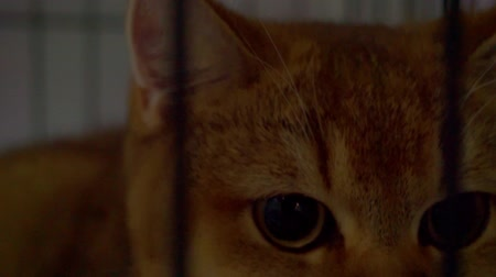 zbloudilý : Close up portrait of a cat who is looking through the bars of the cage Dostupné videozáznamy