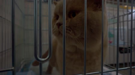 humoristique : Closeup of a cat looking through the bars of a cage Vidéos Libres De Droits