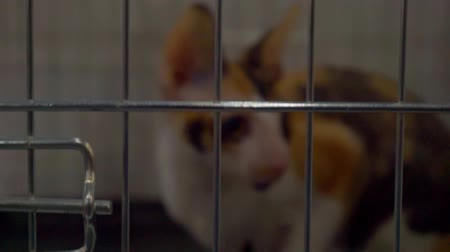 trançado : blurred silhouette of a cat sitting in a cage Stock Footage