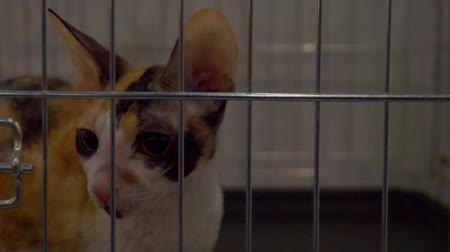 コミカル : Close up portrait of a cat who is looking through the bars of the cage 動画素材