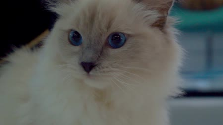 주둥이 : Young crazy surprised cat make big eyes closeup.
