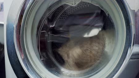 abriu : adult fluffy curious cat locked inside the washing machine