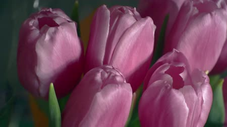 bouquet of bright spring flowers.close-up Stock Footage