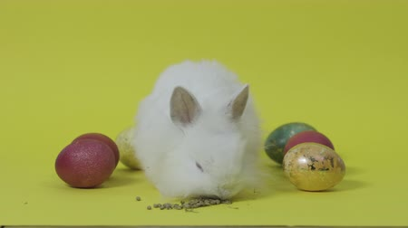 кролик : Easter bunny with eggs on yellow background